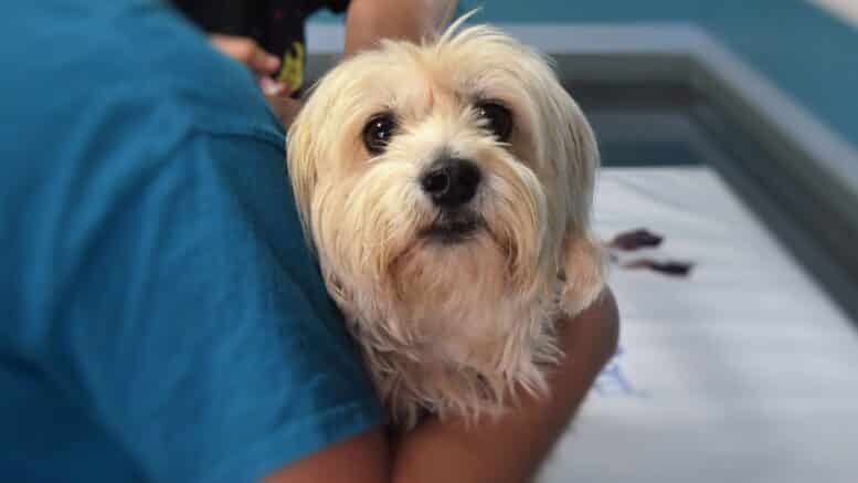 medical grants for dogs