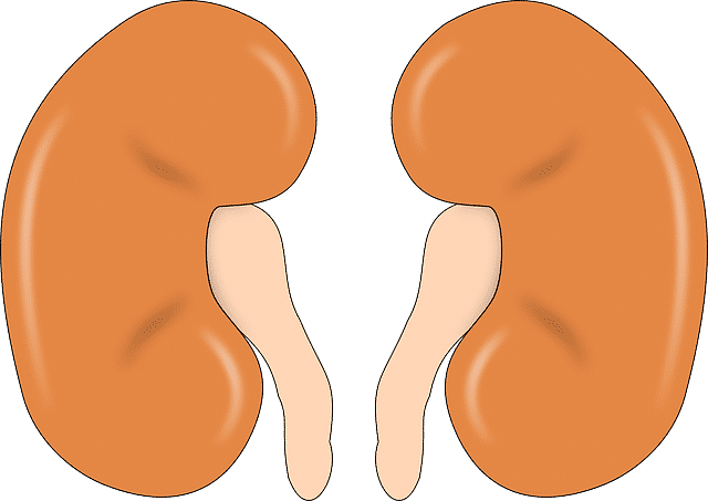 The Importance of a Kidney