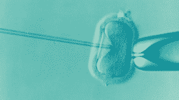donor egg ivf cost